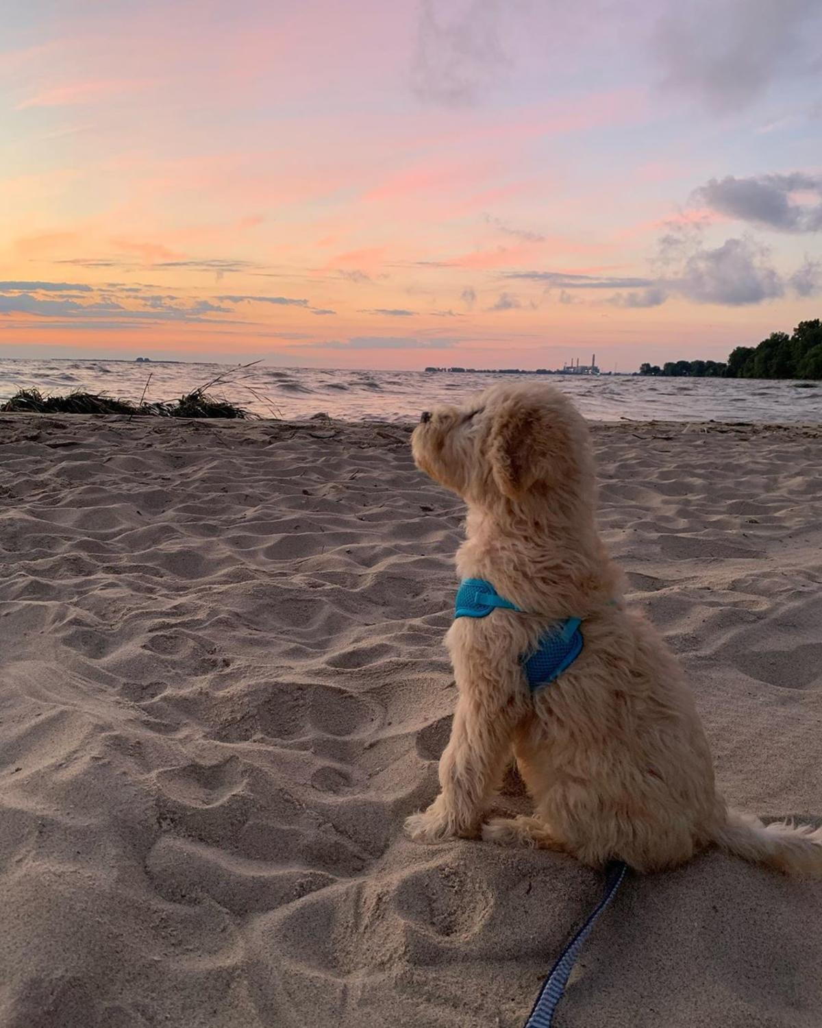 Dog looking out at the water from the sandy beachfront at Bay City State Park at sunrise