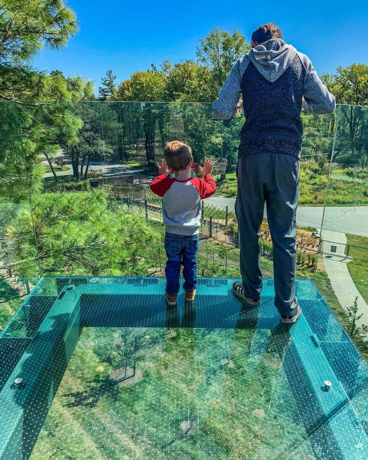 Boy and his dad looking down from a glass overlook four stories high in the forest along the Canopy Walk at Whiting Forest of Dow Gardens in Midland