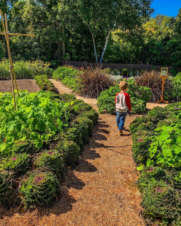 Boy walking through the gardens at Dow Gardens in Midland