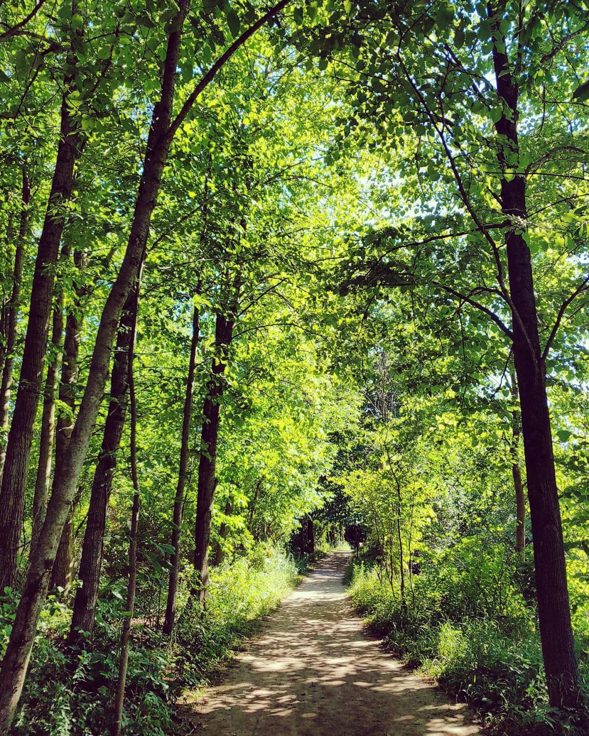 Natural surface trail winding through the canopy of trees at Chippewa Nature Center in Midland