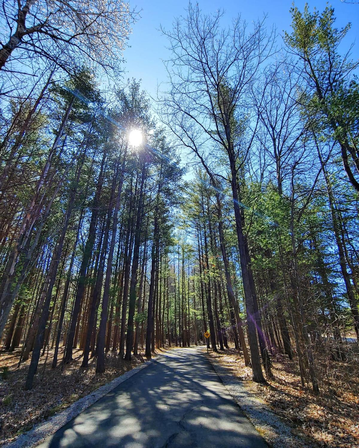 Sun shining through the trees on the trails of Chippewa Nature Center in Midland