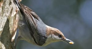 Birding soars amid covid-19 as Americans head outdoors