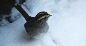 Backyard Birding All Winter Long