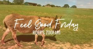 Feel Good Fridays: Roer's Zoofari