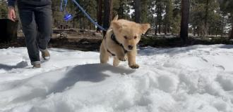Puppy on leash playing in snow.