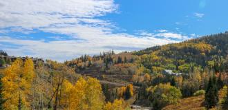 Scenic view of Fall Foliage Trees