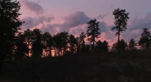 Discover the Night - Albany Pine Bush