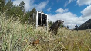 Wild Center Otter Pup Release