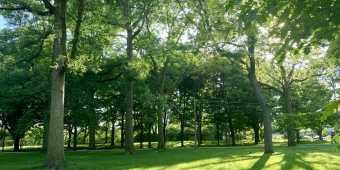 Monarch Park in the Danforth