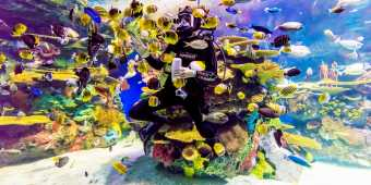 Diver inside tank at Ripley's Aquarium of Canada in Toronto