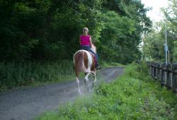 Bronx equestrian 2