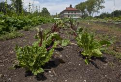 SHCCBG Heritage Farm