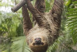RWP Zoo Sloth