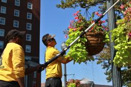 Crew Planting Flowers in Downtown Providence, RI