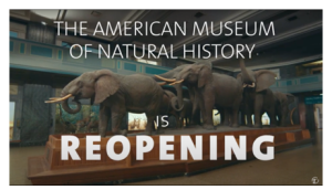 American Museum of Natural History Re-opening