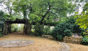 Coker Arboretum Vine Way
