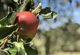 Windy Hill Orchard & Cidery is Opening for Spring