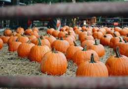 Every Fall Farm Event You Can't Miss