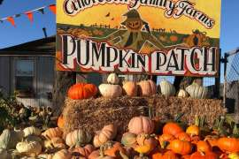 SUNFLOWERS & PUMPKINS: ANDREOTTI FAMILY FARM BRINGS THE FUN!