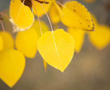 yellow leaves close up fall colors