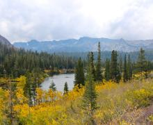 Mammoth Lakes Basin Fall Colors