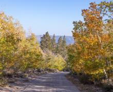 Sagehen Meadows Road