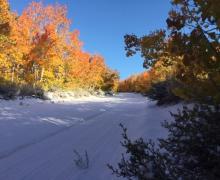 Sagehen with snow