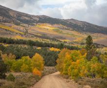 Summers Meadow Road