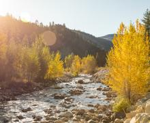 West Walker River Fall Colors
