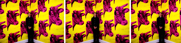 Warhol Cow Wallpaper Display