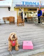 dog on the pier by thomas donuts in Panama City Beach