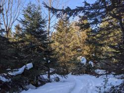 Rove Winery Snowshoe Trail