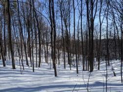 Wintery Landscape of Winter Trails