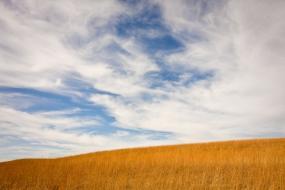 Konza Prairie