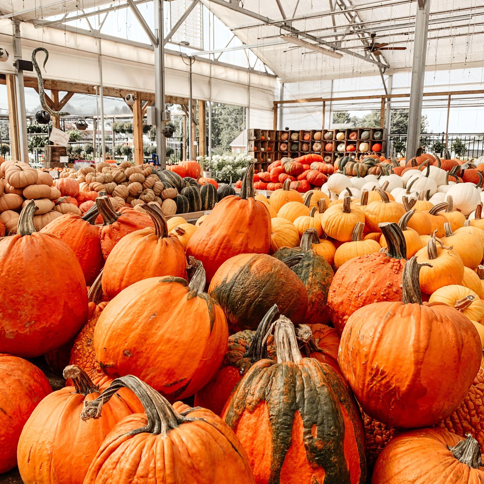 good earth; pumpkin; fall
