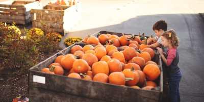 Joe Huber's Pumpkin