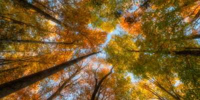 2015 Fall Color: Colorful Canopy
