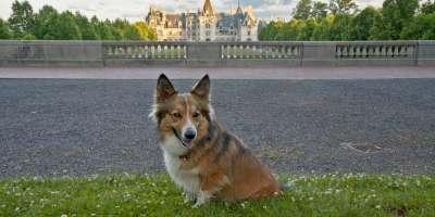 Video Thumbnail - youtube - Sammy Visits Asheville - A Day in Dog-Friendly Asheville, North Carolina