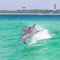 Your view from the dolphin cruise