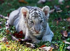 Chestatee_Wildlife_Preserve