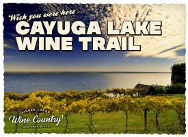 Cayuga Lake Wine Trail Postcard