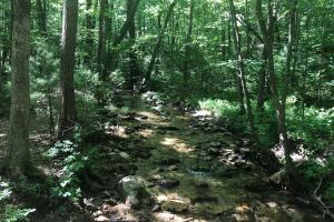 Trees lining a stream at the Irish Gap Access Area