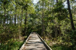 Boardwalk in Sandhill Crane Wildlife Refuge, Ocean Springs, MS