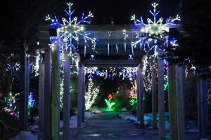Holiday Lights in Bloom