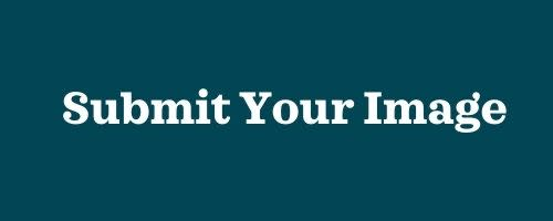 Submit Your Image