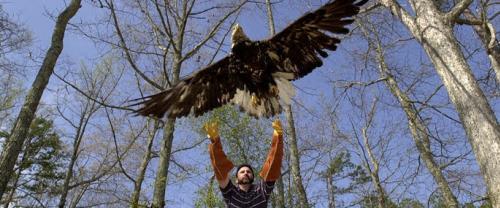 Carolina Raptor Center Eagle Banner