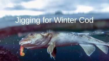 Inshore Jigging for Winter Cod Fishing