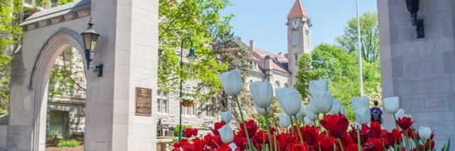 Tulips at Sample Gates In Bloomington, IN