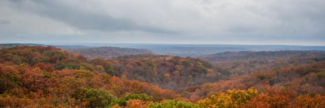 Hoosier National Forest Fall Tree Tops