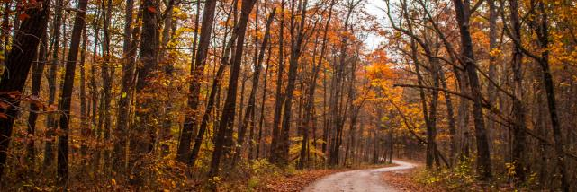 Hoosier National Forest Fall Foliage